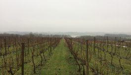 Brynne Vineyard, Northamptonshire