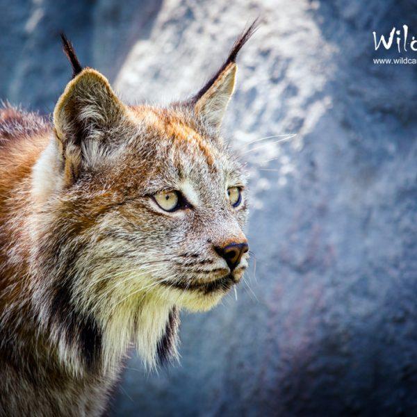 Lynx Photos Portfolio