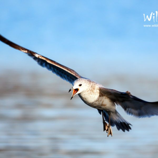Bird Photography Portfolio